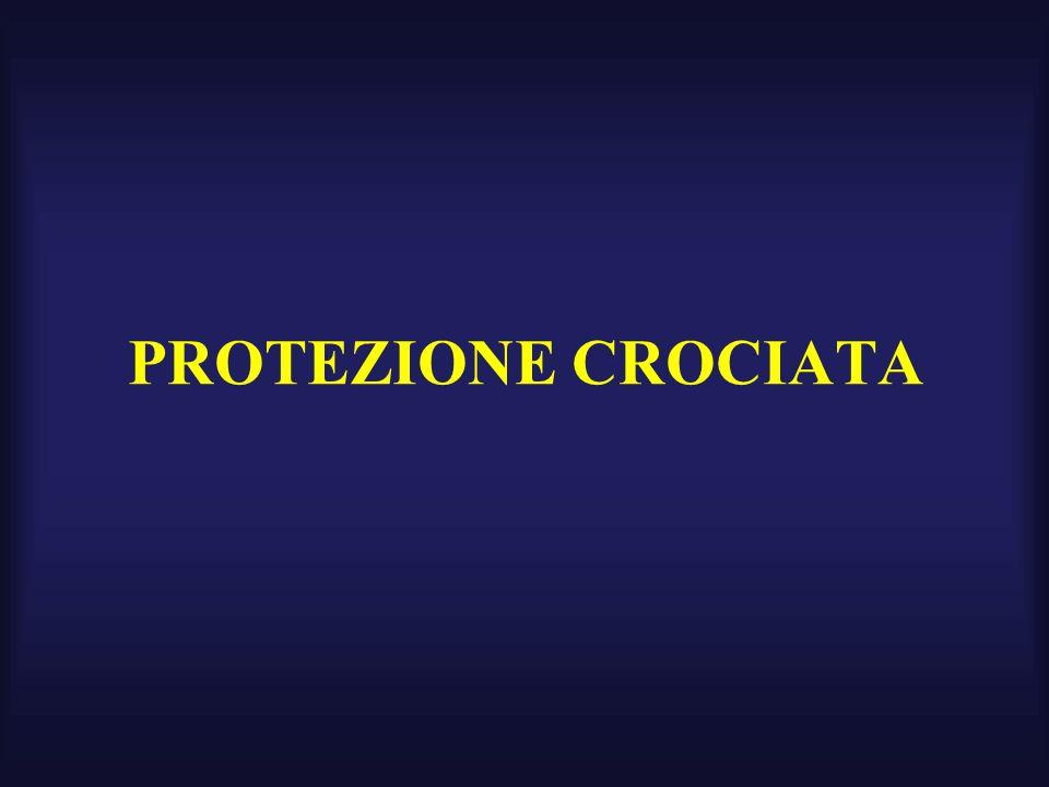 PROTEZIONE CROCIATA