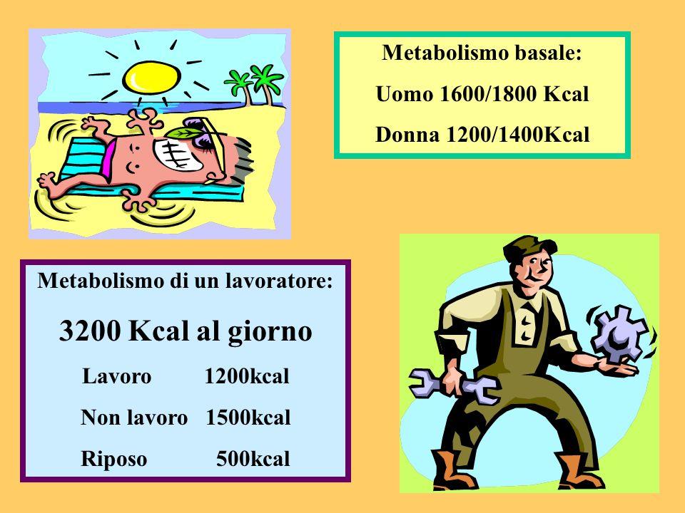 Metabolismo di un lavoratore: