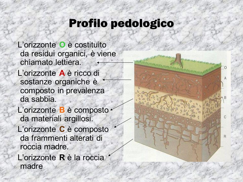 Profilo pedologico L'orizzonte O è costituito da residui organici, è viene chiamato lettiera.
