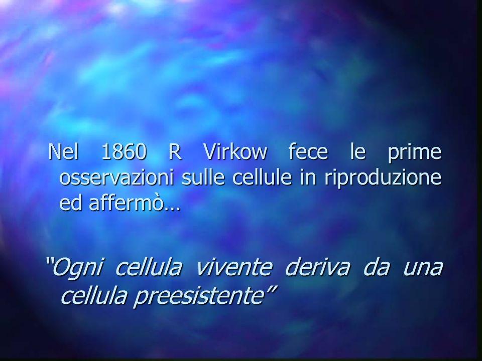 Ogni cellula vivente deriva da una cellula preesistente