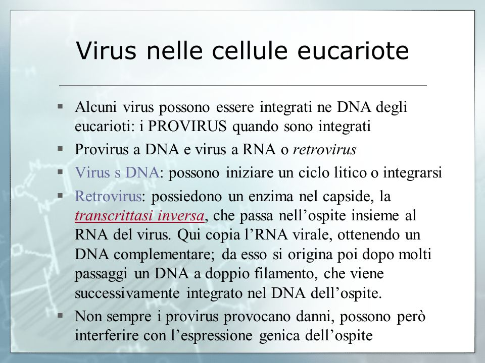 Virus nelle cellule eucariote