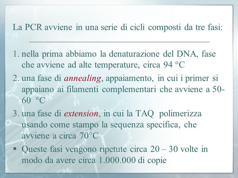 La PCR avviene in una serie di cicli composti da tre fasi: