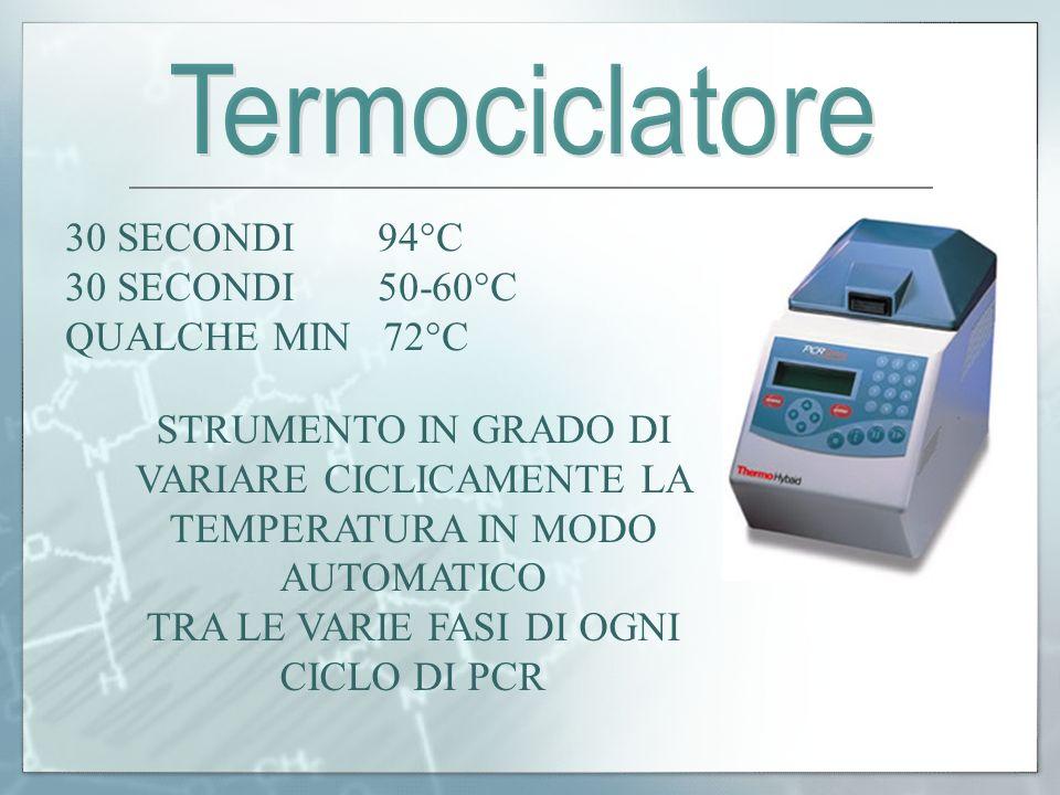 TRA LE VARIE FASI DI OGNI CICLO DI PCR
