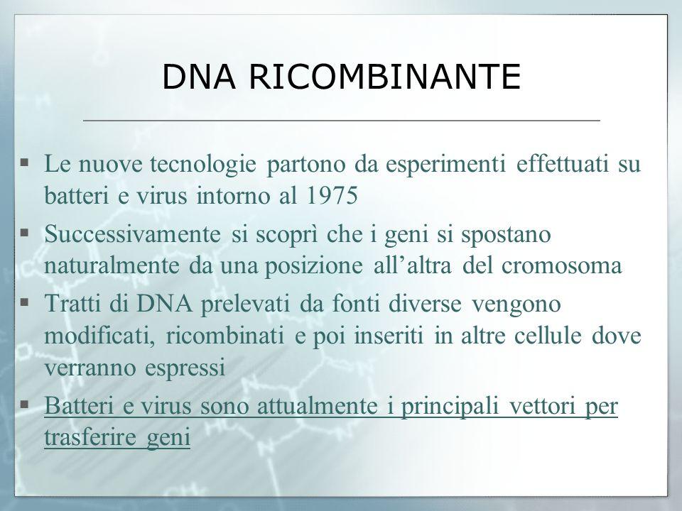 DNA RICOMBINANTE Le nuove tecnologie partono da esperimenti effettuati su batteri e virus intorno al 1975.