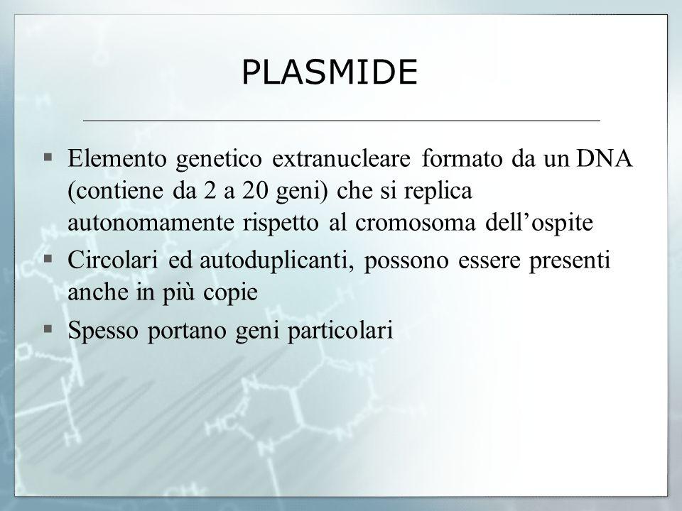 PLASMIDE Elemento genetico extranucleare formato da un DNA (contiene da 2 a 20 geni) che si replica autonomamente rispetto al cromosoma dell'ospite.