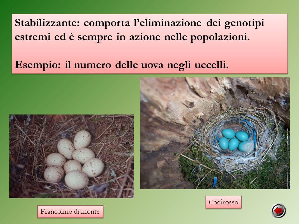 Esempio: il numero delle uova negli uccelli.