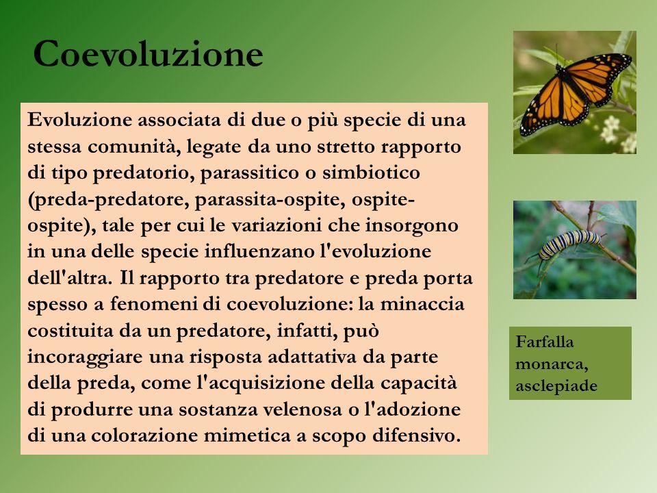 Coevoluzione