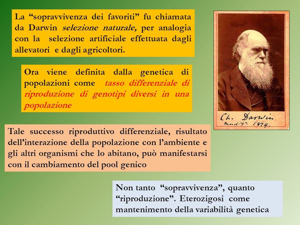 La sopravvivenza dei favoriti fu chiamata da Darwin selezione naturale, per analogia con la selezione artificiale effettuata dagli allevatori e dagli agricoltori.