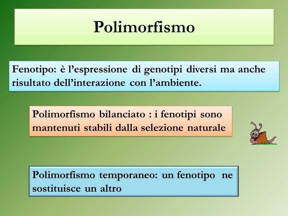 Polimorfismo Fenotipo: è l'espressione di genotipi diversi ma anche risultato dell'interazione con l'ambiente.