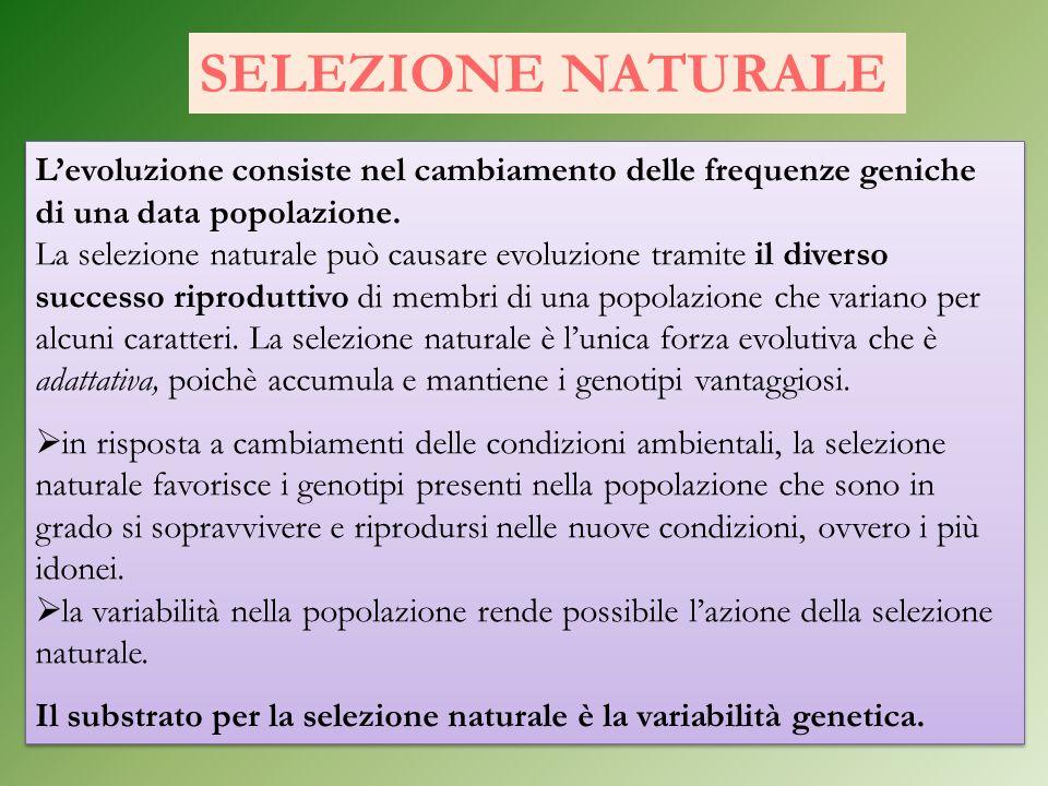 SELEZIONE NATURALE L'evoluzione consiste nel cambiamento delle frequenze geniche di una data popolazione.