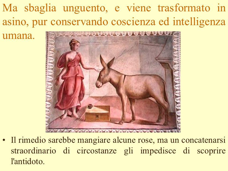 Ma sbaglia unguento, e viene trasformato in asino, pur conservando coscienza ed intelligenza umana.