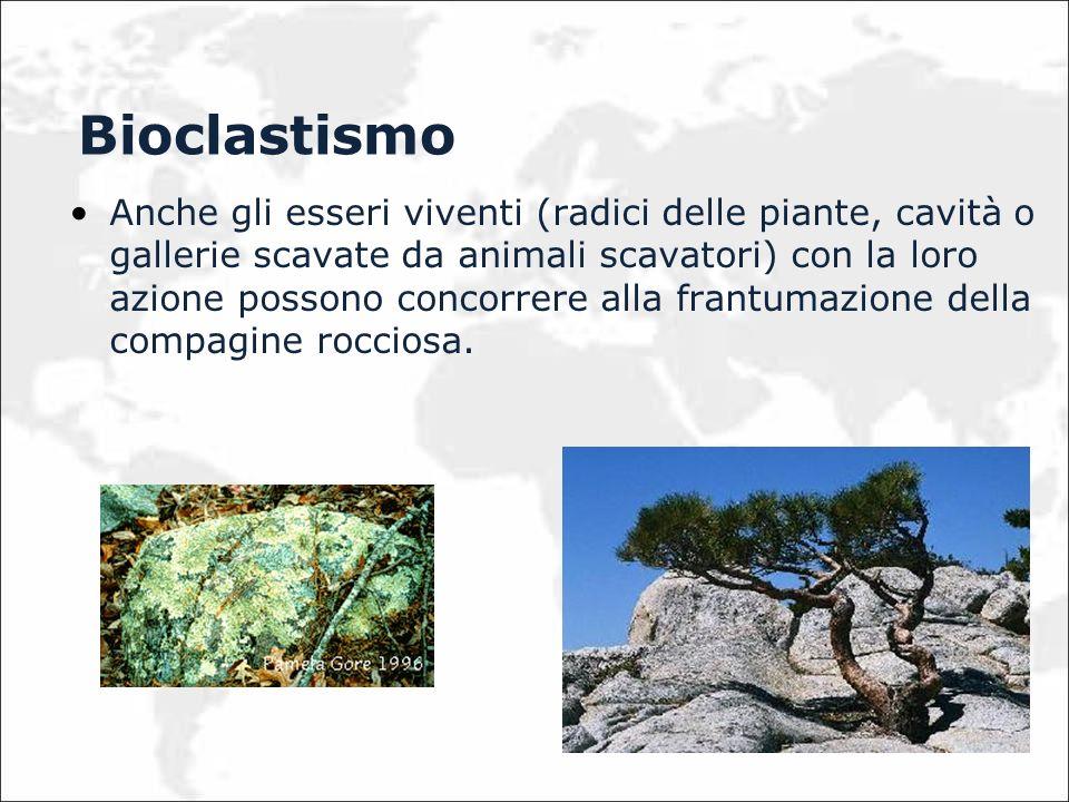 Bioclastismo