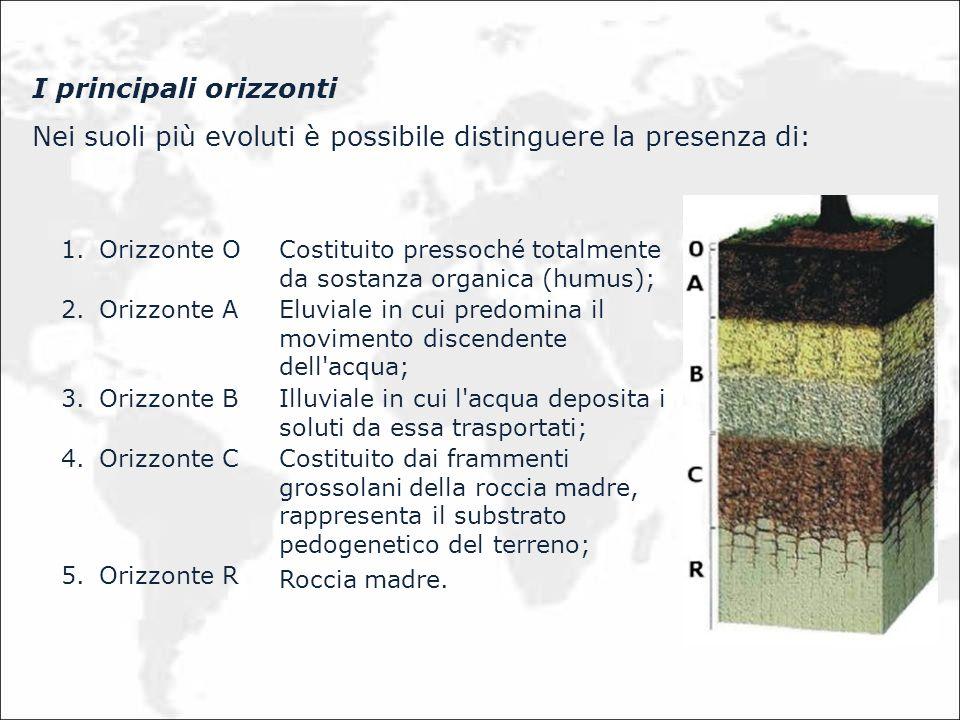 I principali orizzonti Nei suoli più evoluti è possibile distinguere la presenza di: