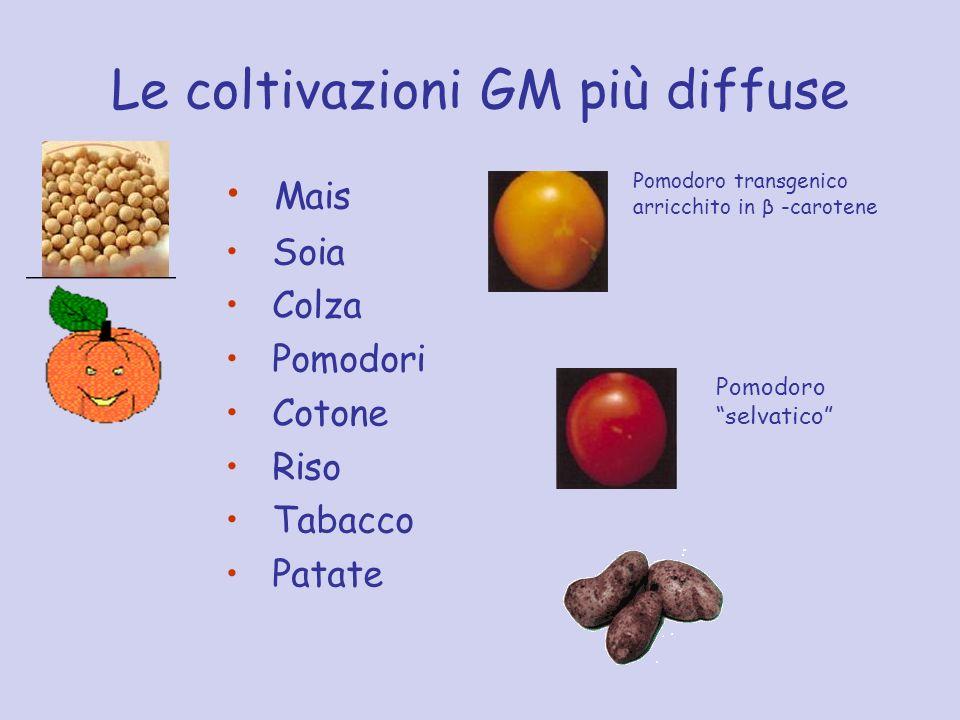 Le coltivazioni GM più diffuse