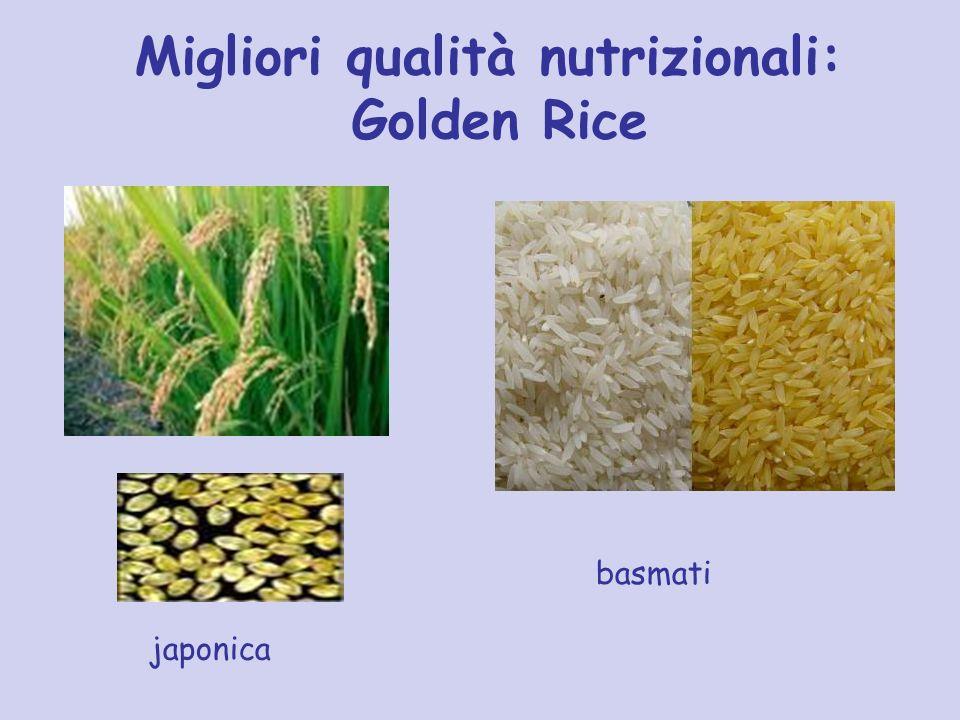 Migliori qualità nutrizionali: Golden Rice