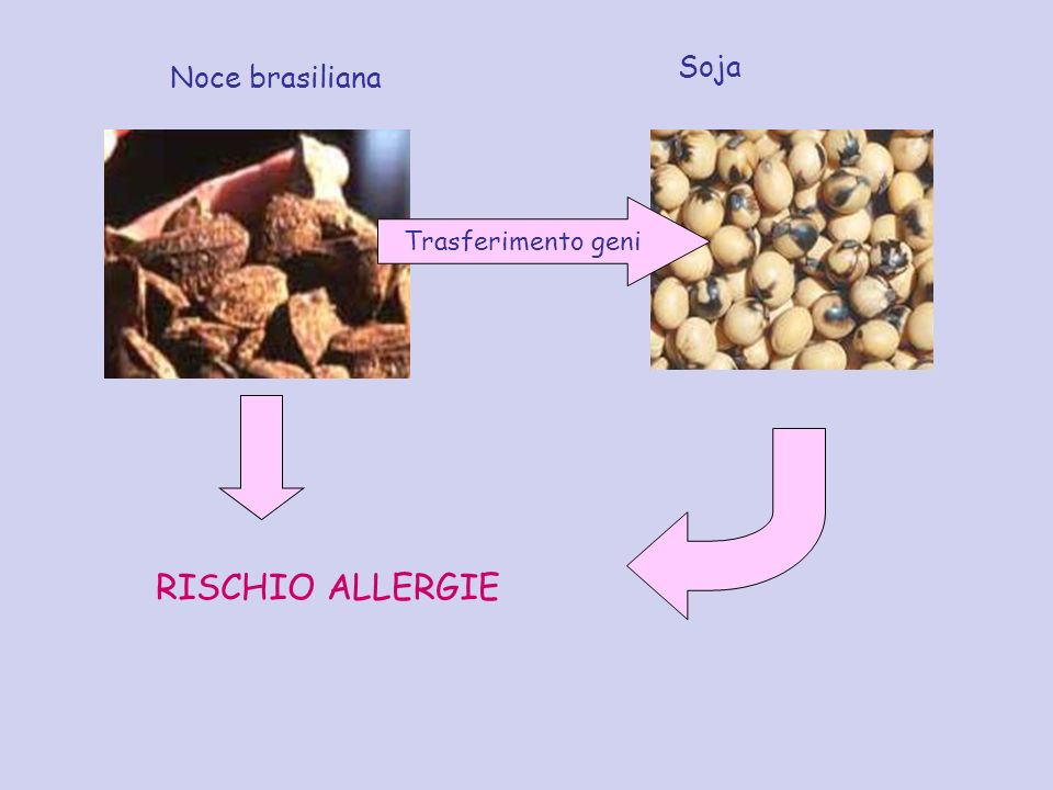 Soja Noce brasiliana Trasferimento geni RISCHIO ALLERGIE