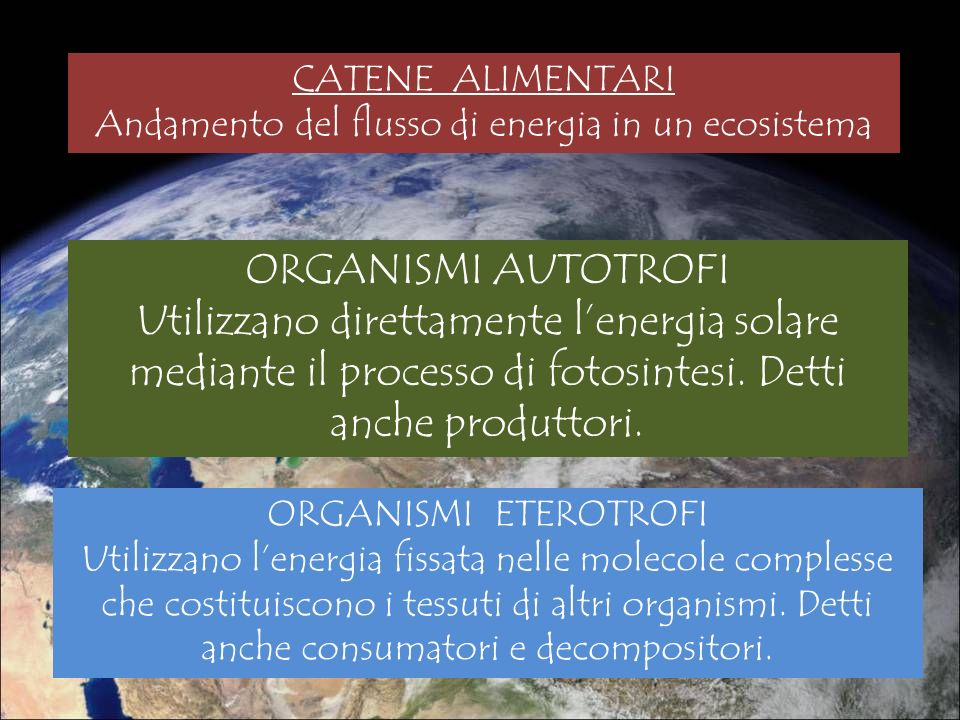 Andamento del flusso di energia in un ecosistema