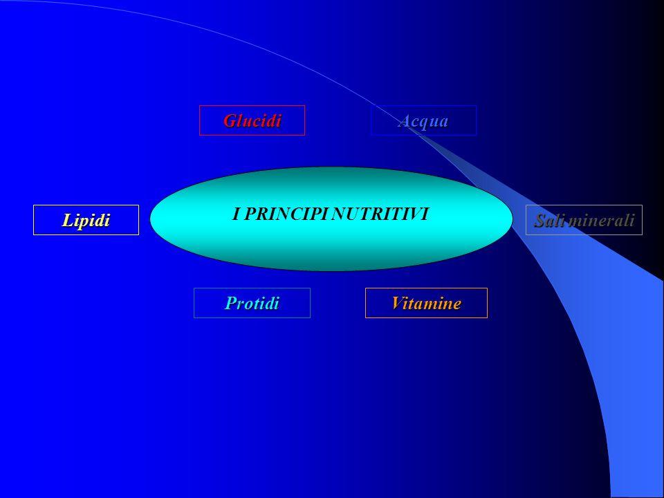Glucidi Acqua I PRINCIPI NUTRITIVI Lipidi Sali minerali Protidi Vitamine