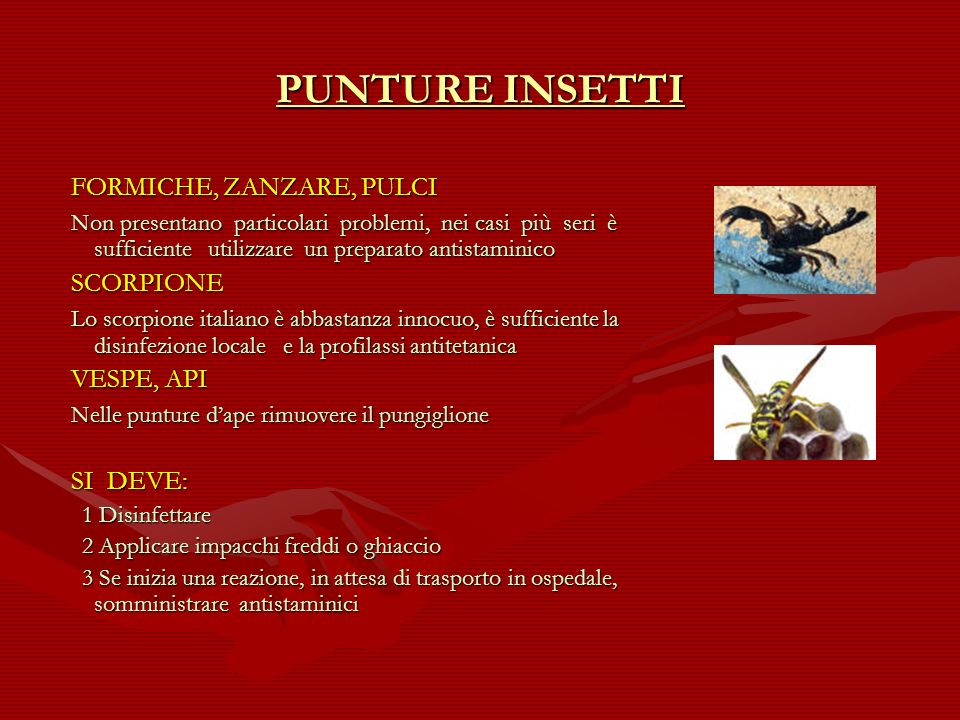 PUNTURE INSETTI FORMICHE, ZANZARE, PULCI