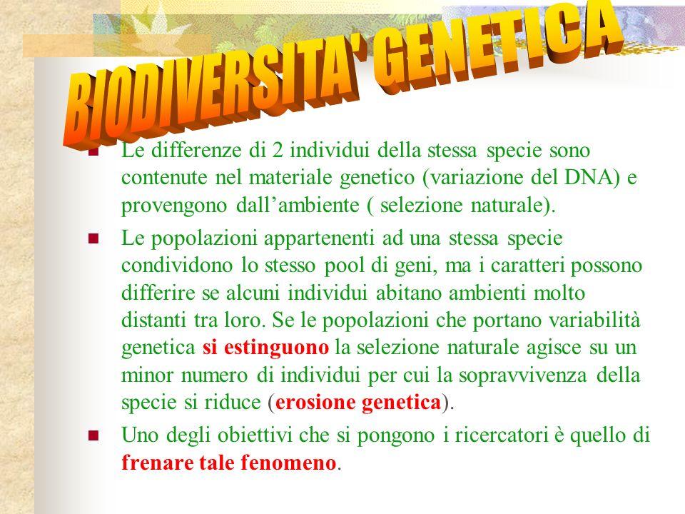 BIODIVERSITA GENETICA