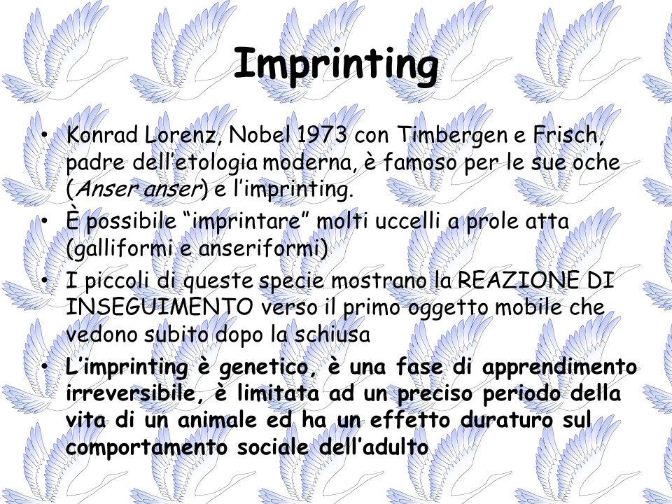 ImprintingKonrad Lorenz, Nobel 1973 con Timbergen e Frisch, padre dell'etologia moderna, è famoso per le sue oche (Anser anser) e l'imprinting.