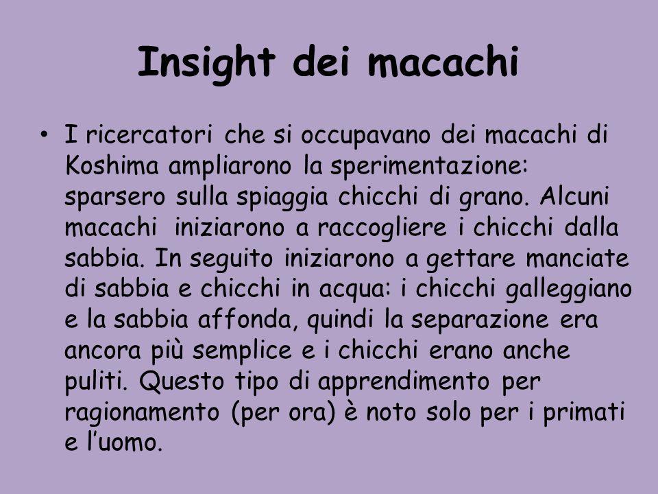 Insight dei macachi