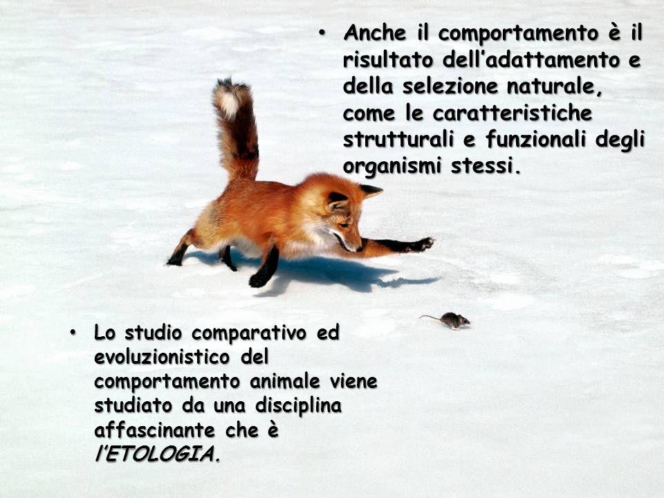 Anche il comportamento è il risultato dell'adattamento e della selezione naturale, come le caratteristiche strutturali e funzionali degli organismi stessi.