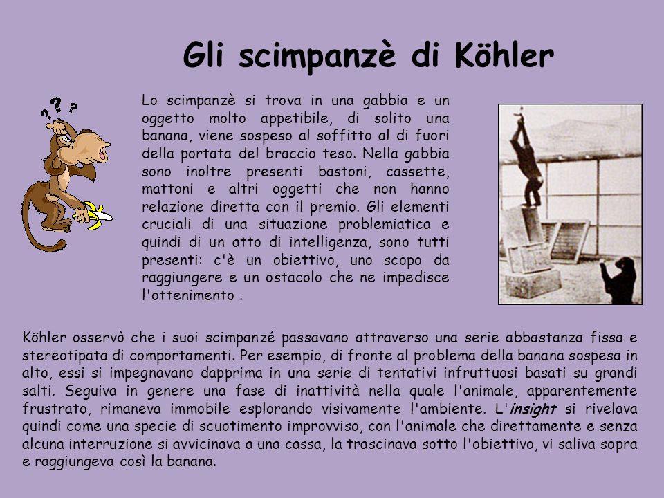 Gli scimpanzè di Köhler