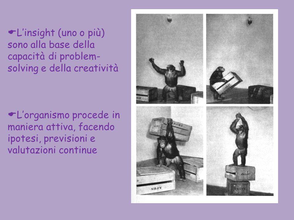 L'insight (uno o più) sono alla base della capacità di problem-solving e della creatività