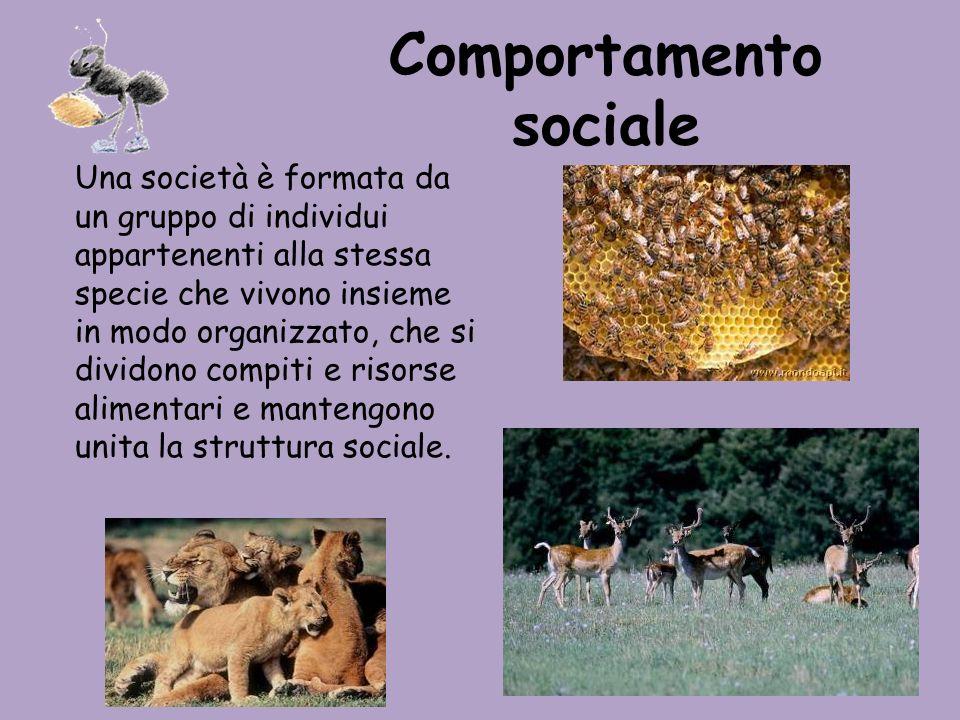 Comportamento sociale