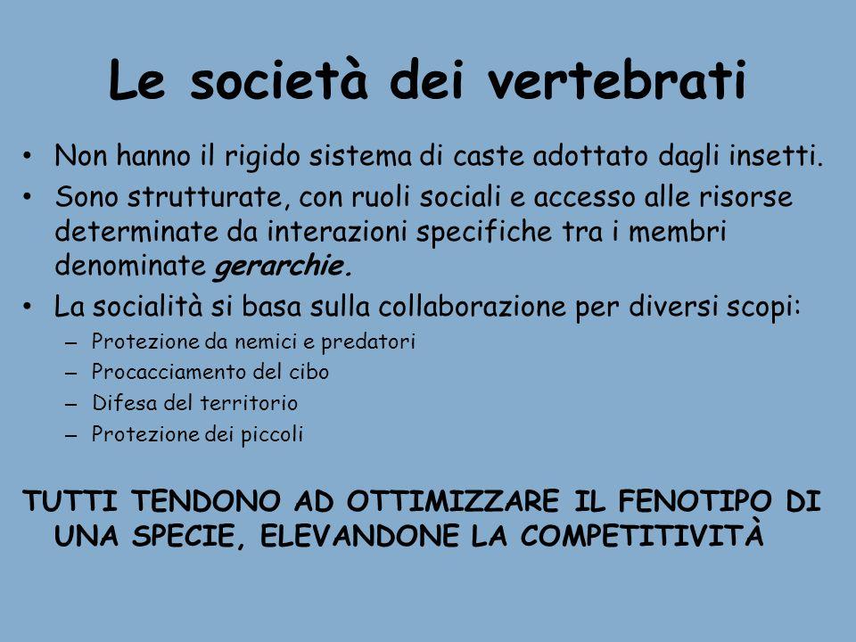Le società dei vertebrati