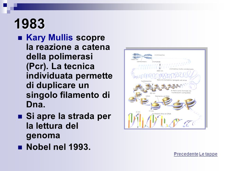 1983 Kary Mullis scopre la reazione a catena della polimerasi (Pcr). La tecnica individuata permette di duplicare un singolo filamento di Dna.