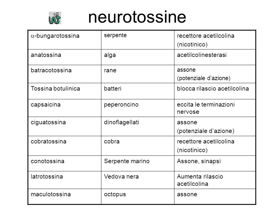 neurotossine -bungarotossina recettore acetilcolina (nicotinico)