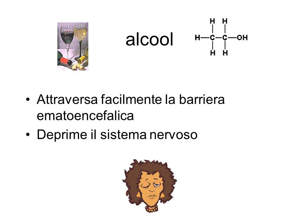 alcool Attraversa facilmente la barriera ematoencefalica
