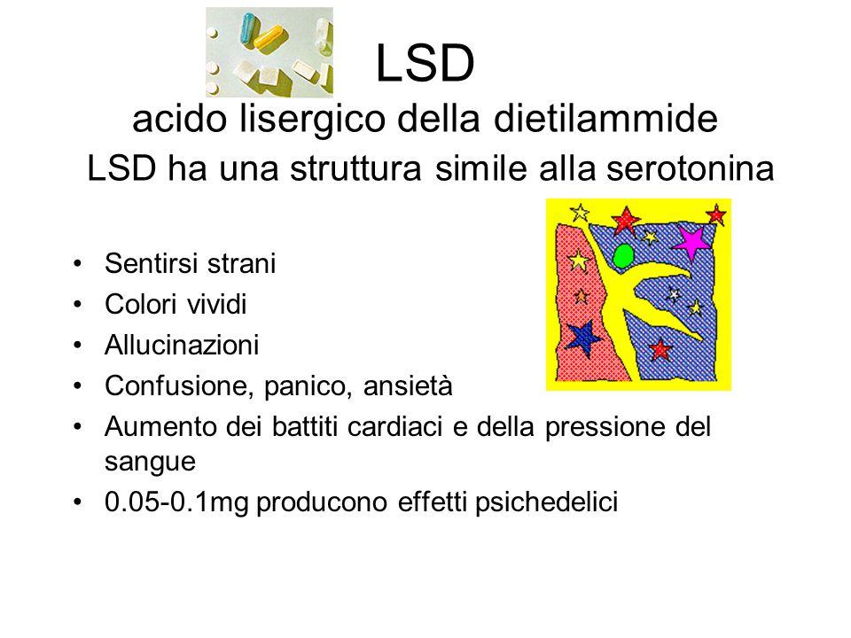 LSD acido lisergico della dietilammide LSD ha una struttura simile alla serotonina