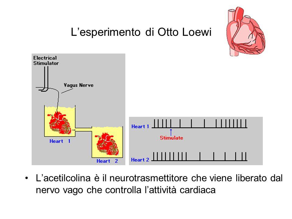 L'esperimento di Otto Loewi