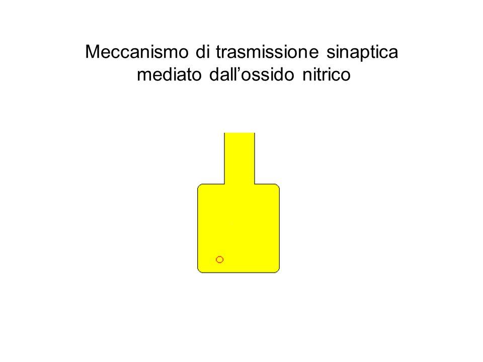 Meccanismo di trasmissione sinaptica mediato dall'ossido nitrico
