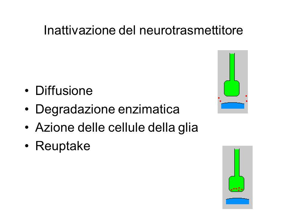 Inattivazione del neurotrasmettitore