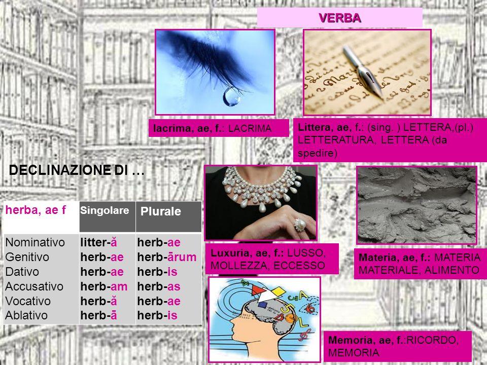 DECLINAZIONE DI … VERBA herba, ae f Plurale