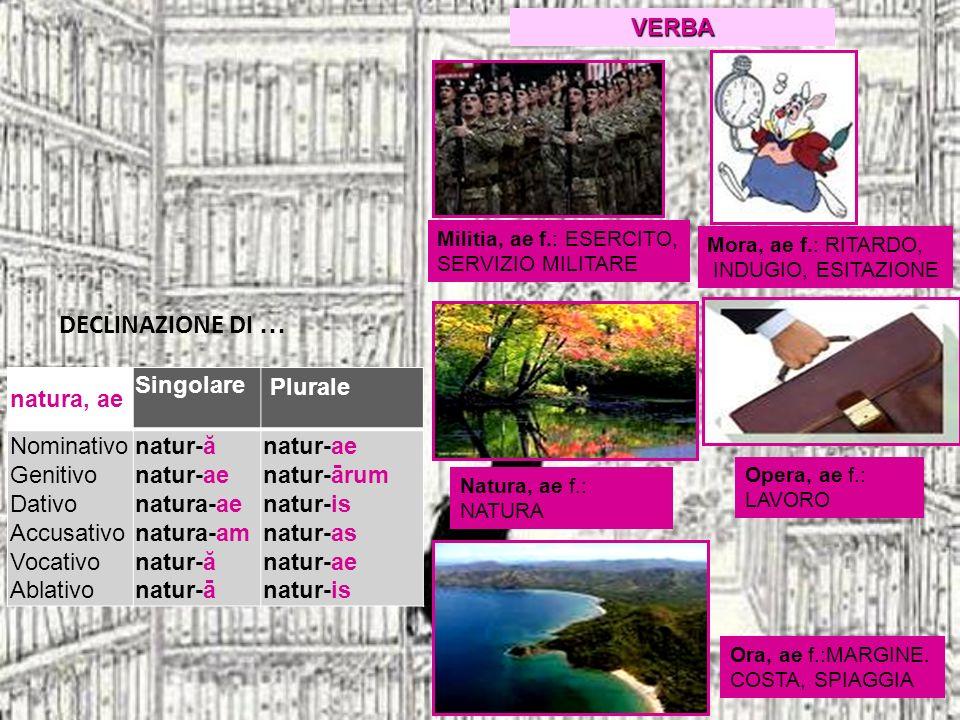DECLINAZIONE DI … VERBA natura, ae Singolare Plurale