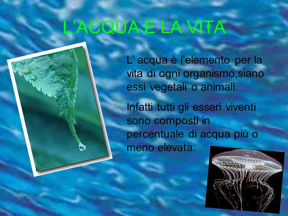 L'ACQUA E LA VITA L' acqua è l'elemento per la vita di ogni organismo,siano essi vegetali o animali.
