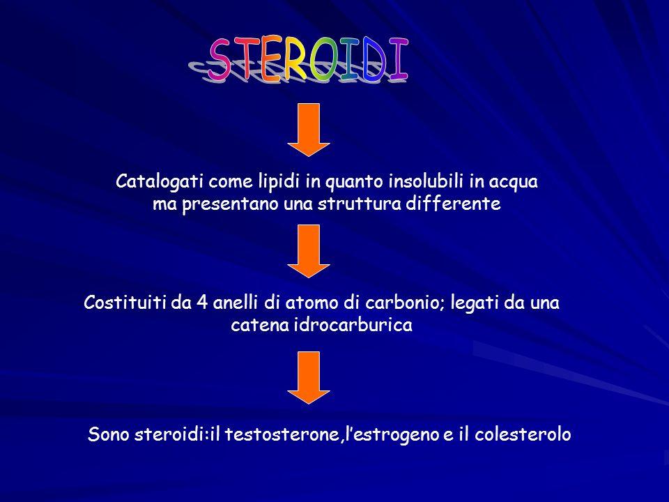 Sono steroidi:il testosterone,l'estrogeno e il colesterolo