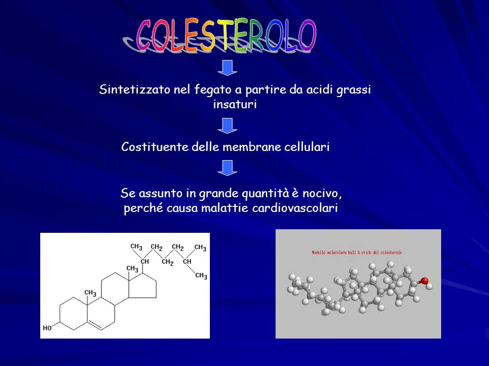 COLESTEROLO Sintetizzato nel fegato a partire da acidi grassi insaturi