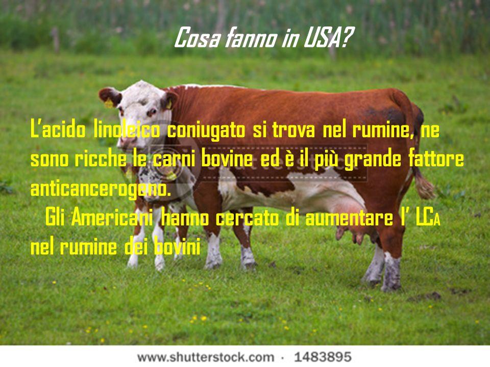 Cosa fanno in USA L'acido linoleico coniugato si trova nel rumine, ne sono ricche le carni bovine ed è il più grande fattore anticancerogeno.