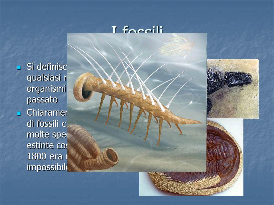 I fossili Si definisce fossile qualsiasi resto o traccia di organismi vissuti nel passato.
