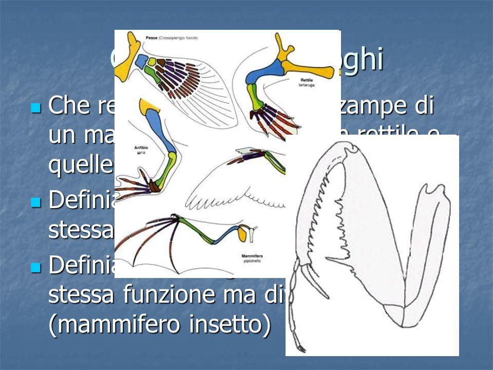Omologhi e analoghi Che relazione esiste fra le zampe di un mammifero, quelle di un rettile e quelle di un insetto