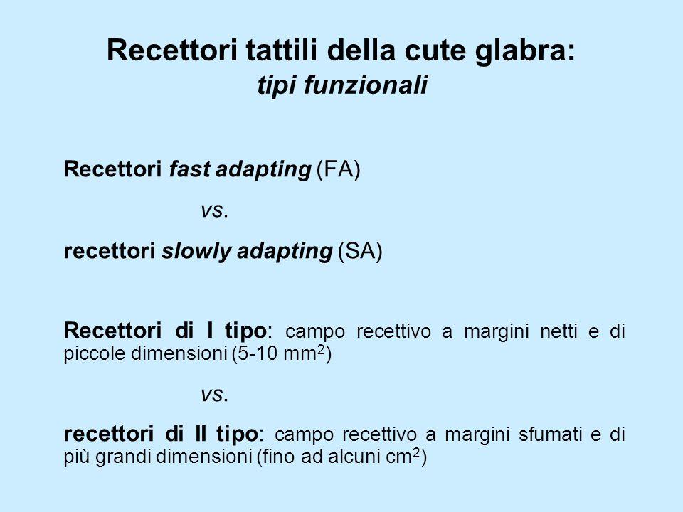 Recettori tattili della cute glabra: tipi funzionali