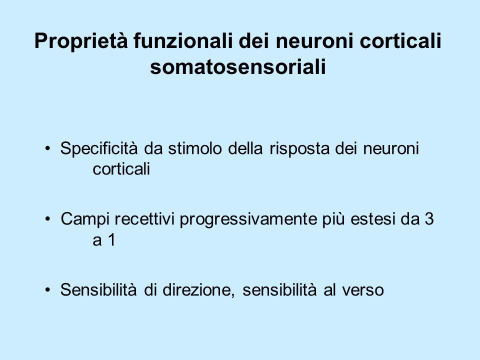 Proprietà funzionali dei neuroni corticali somatosensoriali