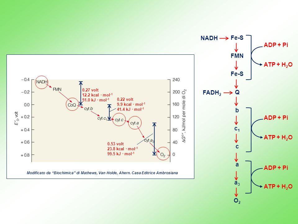 NADH Fe-S FMN Q b c1 c a a3 O2 FADH2