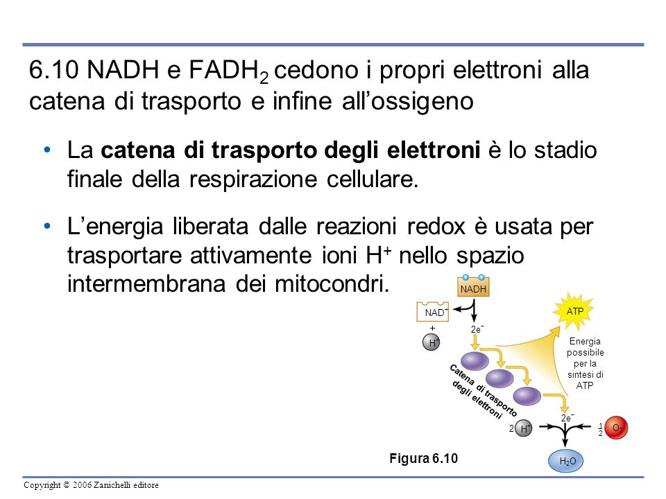 Catena di trasporto degli elettroni